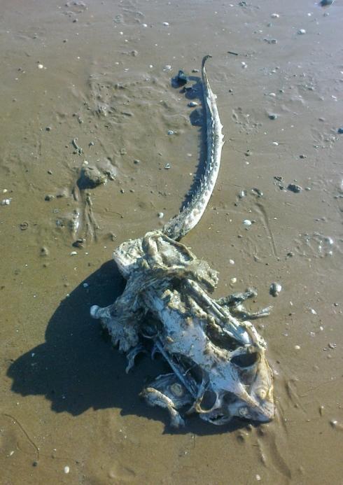 Phát hiện sinh vật kỳ dị dạt vào bờ biển 4