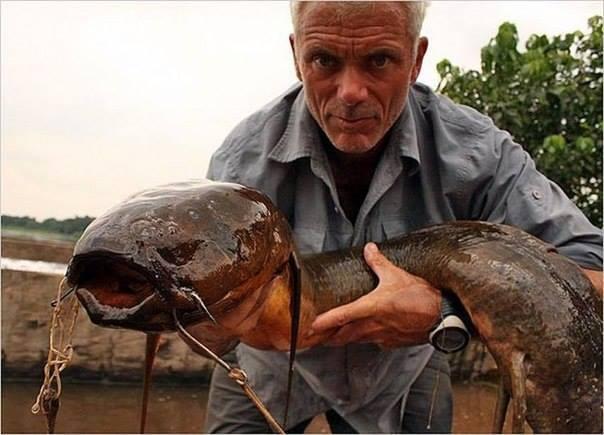 Bắt được cá trê khổng lồ nghi do nhiễm phóng xạ Chernobyl 8