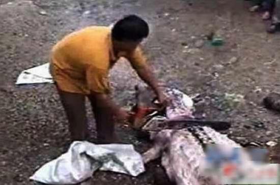Kinh hãi mổ bụng cá sấu, tìm thấy thi thể người chưa phân huỷ 6