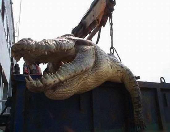 Kinh hãi mổ bụng cá sấu, tìm thấy thi thể người chưa phân huỷ 4