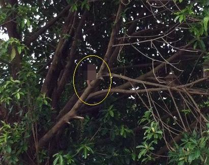 Bí ẩn xác nam thanh niên treo cổ trên cây đa trong nghĩa trang 5
