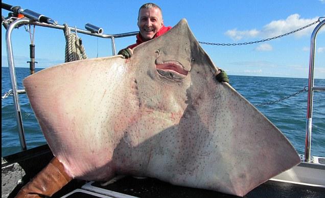 Người đàn ông câu được cá đuối khổng lồ 6