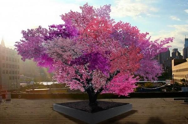 Loài cây kỳ lạ cho ra 40 loại quả khác nhau 3