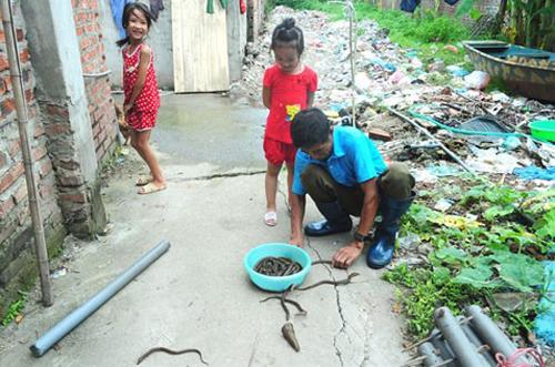 Chuyện lạ: Bắt lươn tại các cao ốc giữa Hà Nội 8