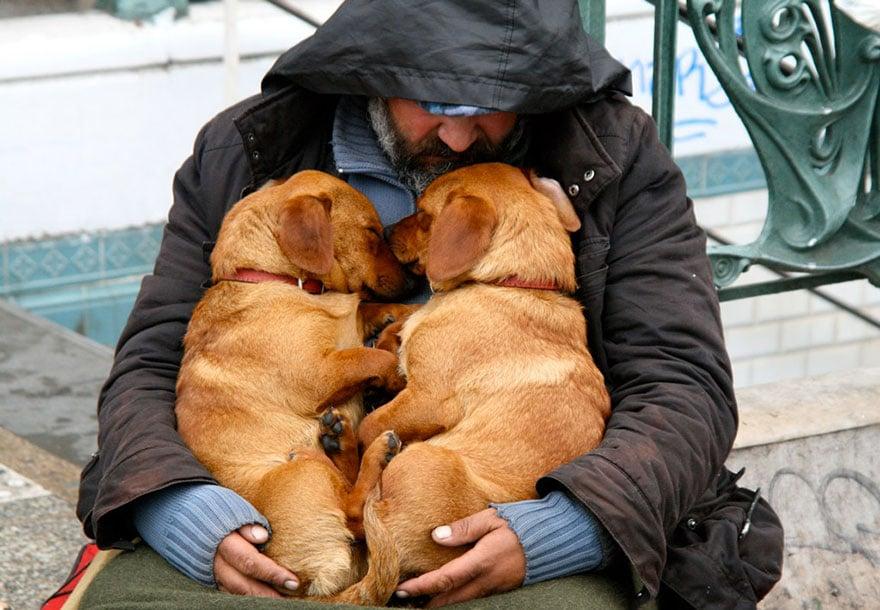 Hình ảnh Cảm động chú chó trung thành bảo vệ chủ dù bị đói số 10