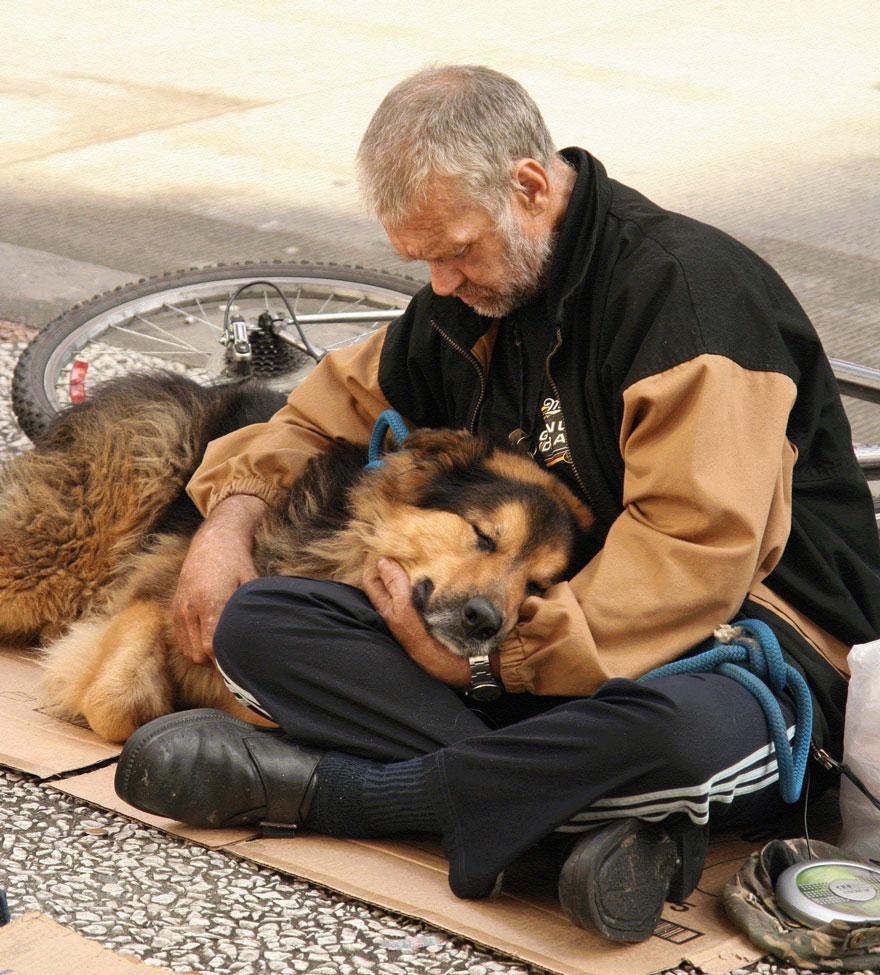 Cảm động chú chó trung thành bảo vệ chủ dù bị đói 17