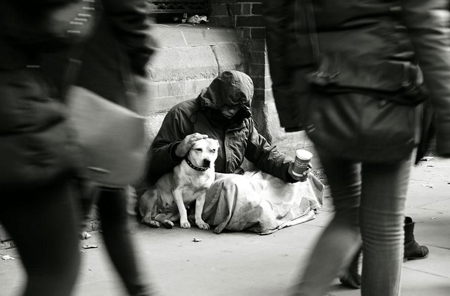 Cảm động chú chó trung thành bảo vệ chủ dù bị đói 9