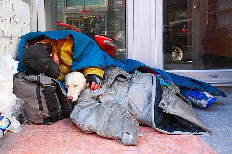 Hình ảnh Cảm động chú chó trung thành bảo vệ chủ dù bị đói số 6