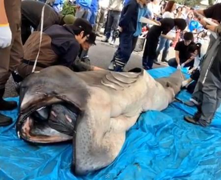 Hình ảnh Phát hiện những loài cá kỳ lạ cực hiếm trên thế giới số 2