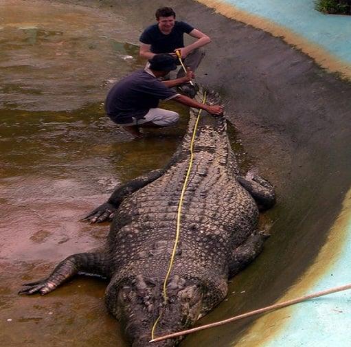 Vợ bất lực nhìn cá sấu nuốt chửng chồng 4