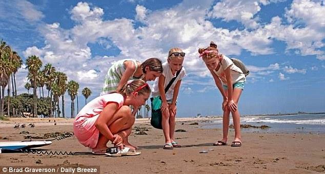 Hàng tỷ sinh vật lạ trong suốt phủ kín bờ biển Mỹ 7