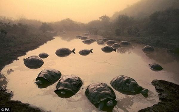 Rùa 'truyền giáo' khổng lồ nổi tiếng thế giới vừa qua đời ở tuổi 60 4