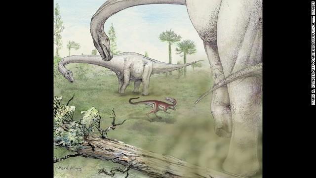 Phát hiện loài khủng long nặng 65 tấn 6