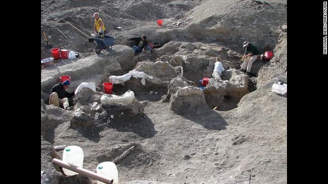Phát hiện loài khủng long nặng 65 tấn 7