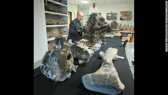 Phát hiện loài khủng long nặng 65 tấn 9