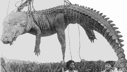 Cận cảnh đảo cá sấu nơi 1.000 binh lính Nhật đi qua còn 20 người sống 6