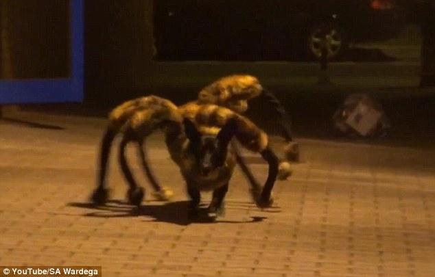 Clip chó giả làm nhện khổng lồ khiến nhiều người hoảng hồn 6