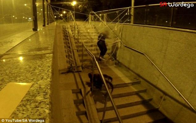 Clip chó giả làm nhện khổng lồ khiến nhiều người hoảng hồn 8