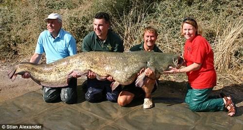 'Thủy quái' cá da trơn khổng lồ hơn 2m bị tóm gọn 8