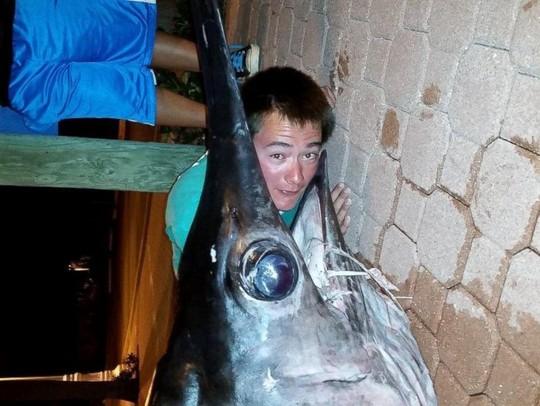 Hình ảnh Bắt được cá kiếm dài hơn 4m, nặng 318kg số 1
