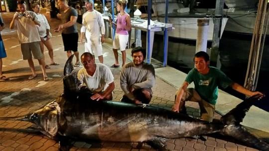 Hình ảnh Bắt được cá kiếm dài hơn 4m, nặng 318kg số 3