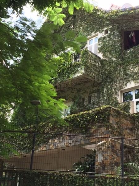 Hình ảnh Cây leo trèo biệt thự, mốt mới của nhà giàu Thủ đô số 2