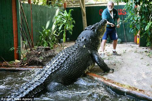 Gần 30 năm sống chung nhà với con cá sấu lớn nhất thế giới 4