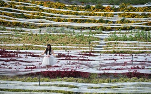 Kỷ lục với chiếc váy cưới có đuôi dài  4.800 m 7