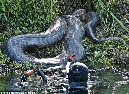 Những loài vật khổng lồ đáng sợ trên thế giới 5