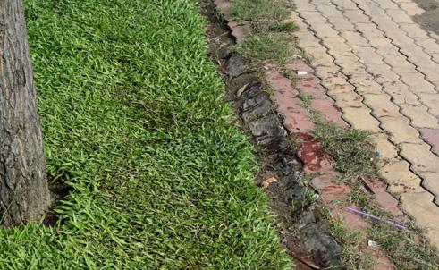 Thông tin mới vụ giết người, vứt xác phi tang rúng động Sài Gòn 5