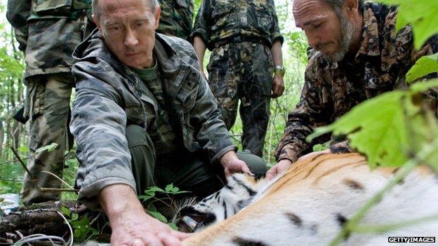 Hổ quý của Tổng thống Putin vượt biên sang Trung Quốc 5