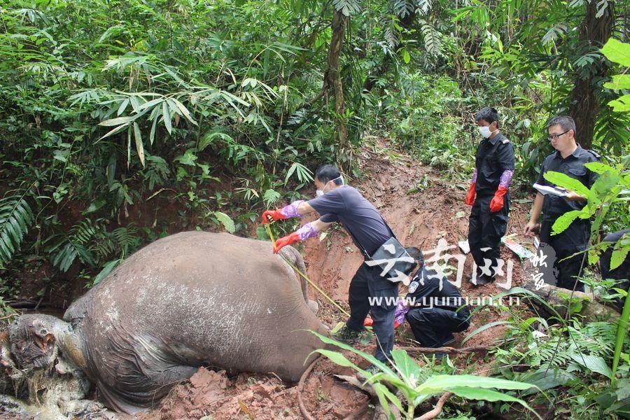 Phẫn nộ hình ảnh voi bị chặt đầu, cướp ngà ở Trung Quốc 4
