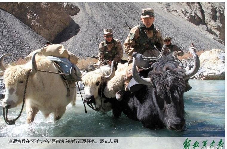 Cận cảnh binh lính Trung Quốc cưỡi bò tuần tra biên giới 6