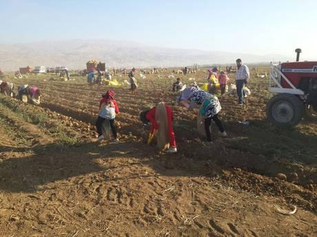 200.000 trẻ em Syria bị biến thành nô lệ lao động ở Lebanon 6