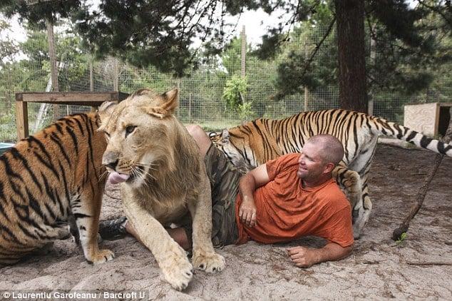 Người đàn ông sống chung với hổ dữ suốt 9 năm 12