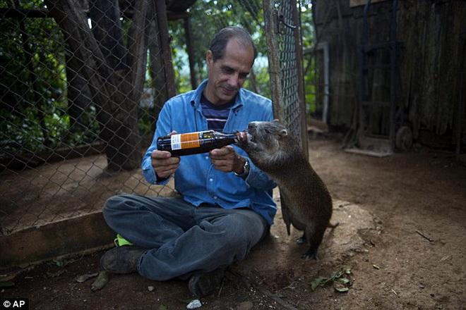 Hình ảnh Cặp vợ chồng sống chung với chuột khổng lồ suốt 5 năm số 1