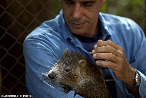 Chuột khổng lồ thích được ôm hôn và uống rượu với chủ 10