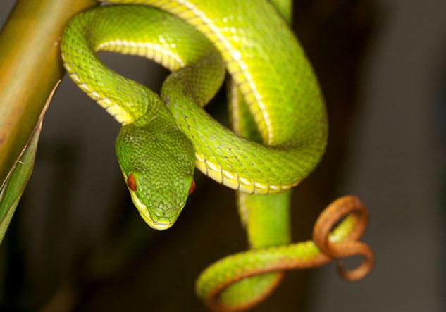Công an xác minh thông tin kẻ lạ mặt thả rắn lục đuôi đỏ cắn người 5
