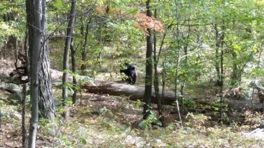 Bị gấu dữ tấn công đến chết vì cố nán lại để chụp ảnh 4