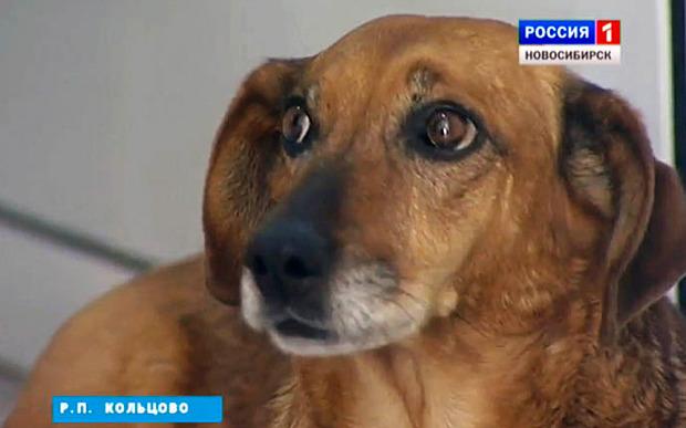 Chú chó trung thành ngồi đợi chủ 2 năm ở bệnh viện 5