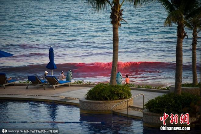 Ngỡ ngàng xem thủy triều đỏ xuất hiện ở bãi biển Trung Quốc 5