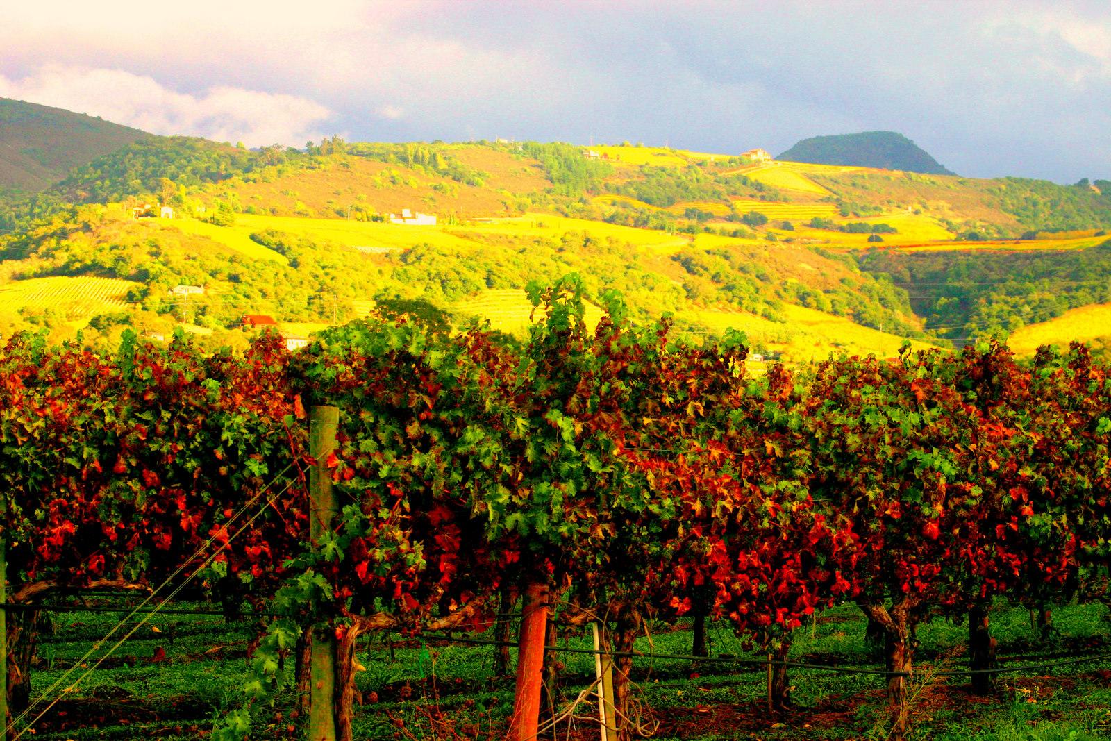Ngắm vẻ đẹp mê hồn của thung lũng trồng nho nổi tiếng thế giới 5