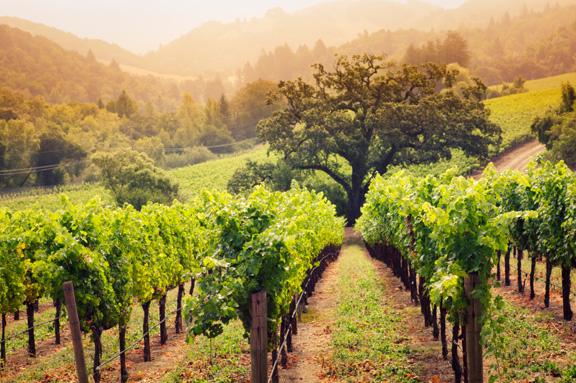 Ngắm vẻ đẹp mê hồn của thung lũng trồng nho nổi tiếng thế giới 6