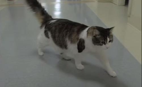 Bí ẩn khoa học: chó 'thôi miên', mèo 'đoán trước' cái chết 7