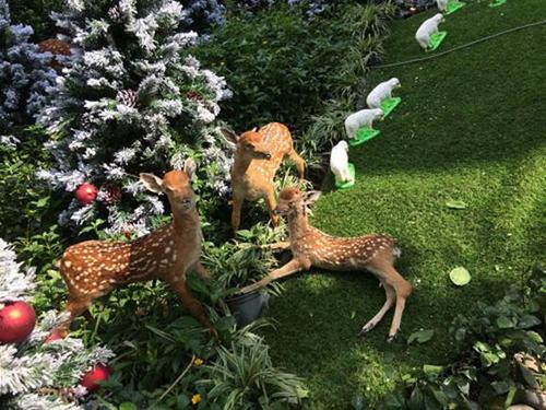 Đàm Vĩnh Hưng khoe vườn Giáng Sinh đẹp lung linh  5