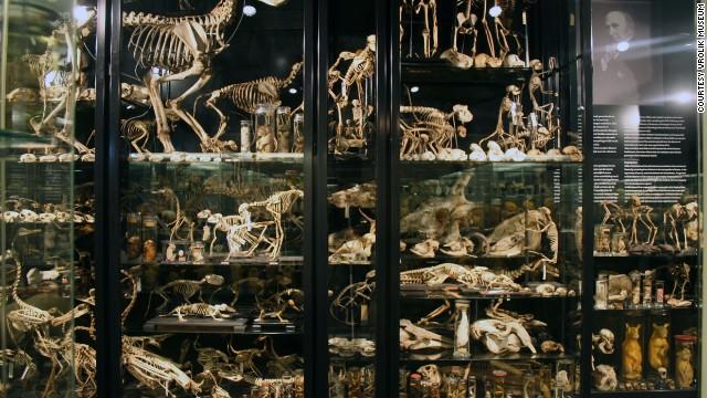 10 bảo tàng y kỳ dị nhất thế giới 14