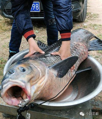 Bắt được cá chép
