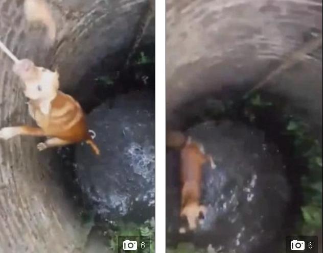 Hình ảnh Chú chó thông minh tự cứu mình khi rơi xuống giếng sâu số 1