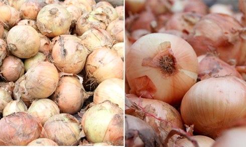 Cách phân biệt rau củ quả Trung Quốc 7
