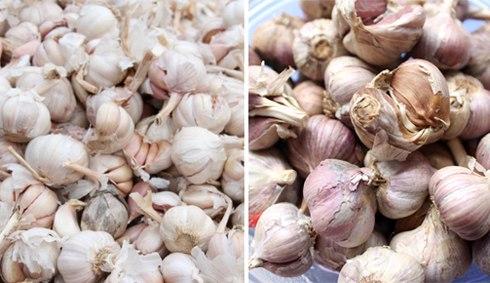 Cách phân biệt rau củ quả Trung Quốc 10